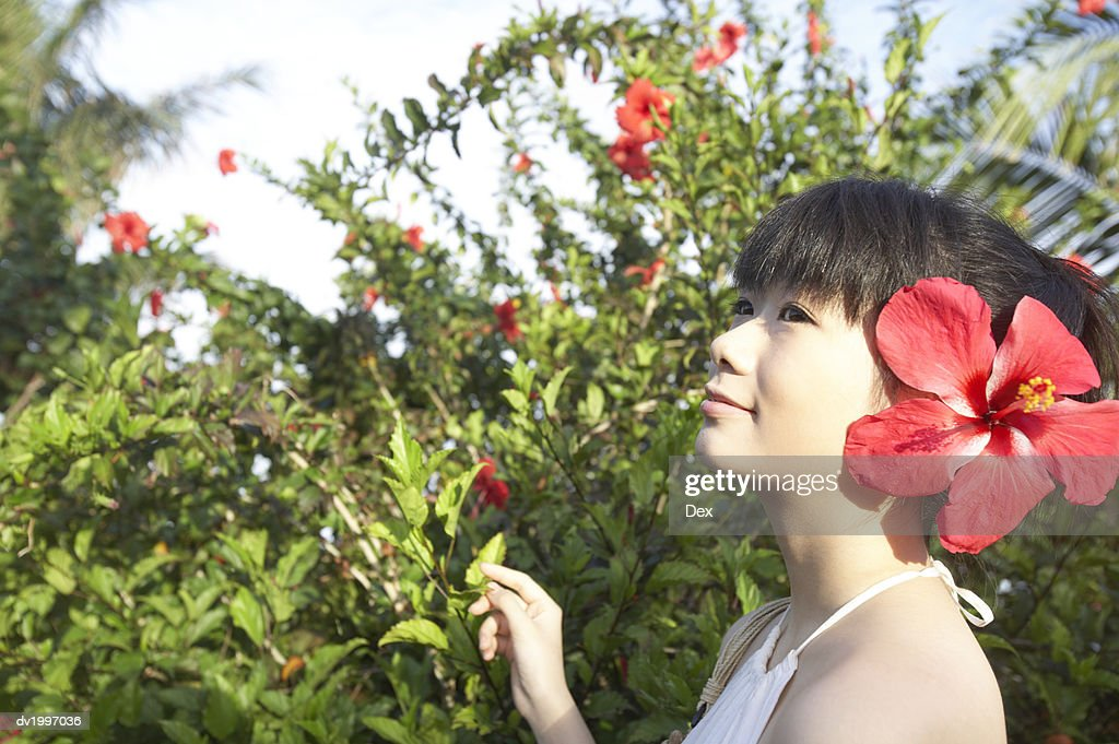 Woman Wearing a Large Flower in a Her Hair : Stock Photo
