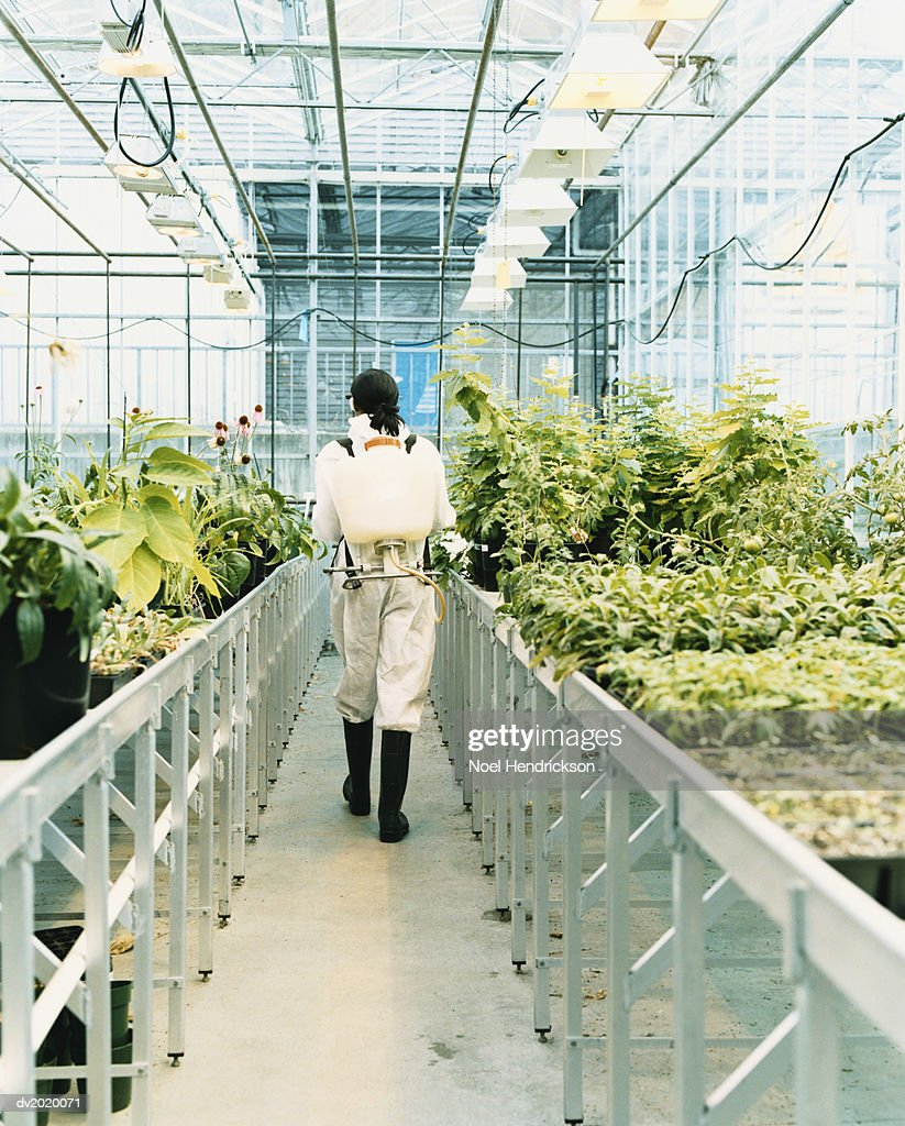 Woman Wearing a Protective Suit Walking Through a Greenhouse of Plants : Stock Photo