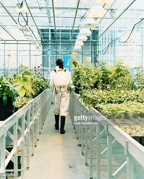 Woman Wearing a Protective Suit Walking Through a Greenhouse of Plants