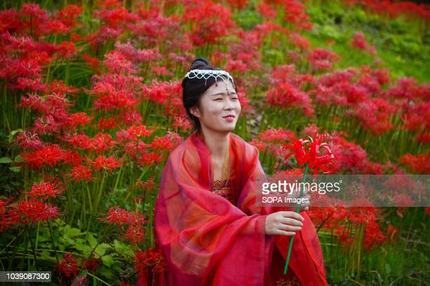A woman wearing a traditional costume watches a wedding in a field of Lycoris Radiatas in full bloom near the Yakachi River in Handa city Many...