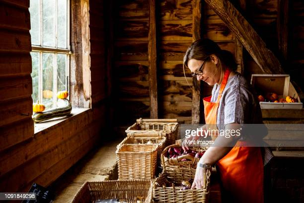 woman wearing apron standing in farm shop, arranging baskets with vegetables. - organic farm stock photos and pictures