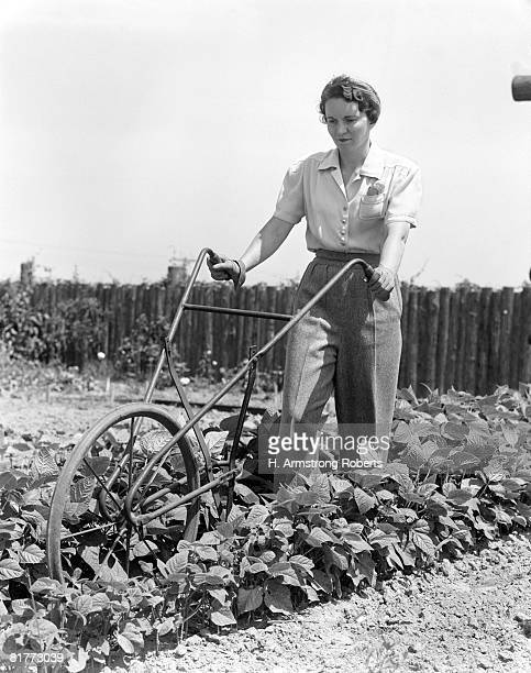 Woman Wearing Blouse Slacks And Gloves Pushing A Harrow Between Rows Of Plants In A Vegetable Garden With A Rustic Fence In The Background.
