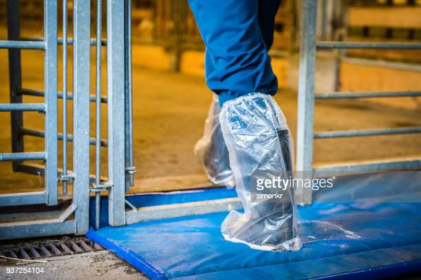 woman wearing shoe protector - shoe covers stock pictures, royalty-free photos & images