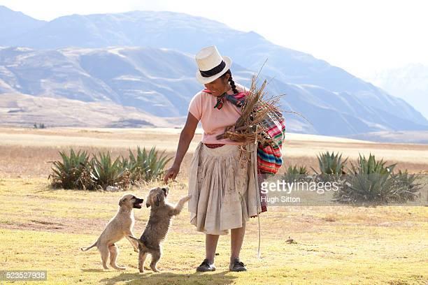 woman wearing traditional costume, with two puppy dogs. the mountain region near moray. cusco. peru. - hugh sitton fotografías e imágenes de stock