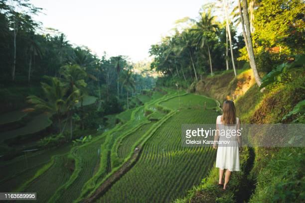 woman wearing white dress on terraced rice paddies in bali, indonesia - 白のドレス ストックフォトと画像