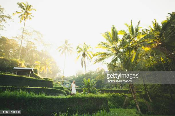 woman wearing white dress on terraced rice paddies in bali, indonesia - reisterrasse stock-fotos und bilder