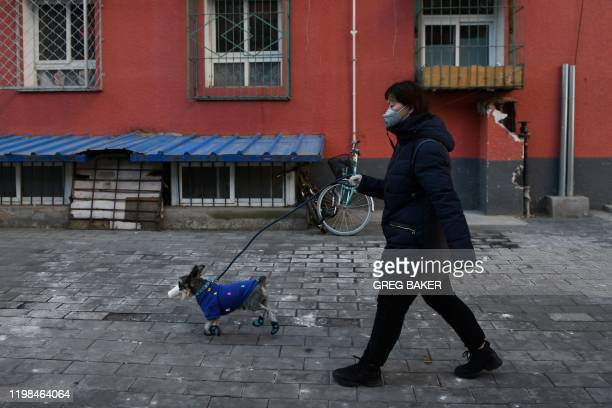 A woman wears a face mask as she walks her dog on a street in Beijing on February 4 2020 The number of total infections in China's coronavirus...