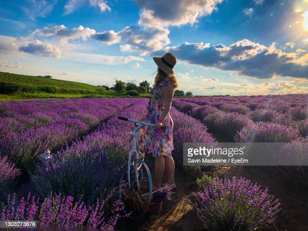 woman with a bicycle in a field of lavender - lady madeleine stock-fotos und bilder