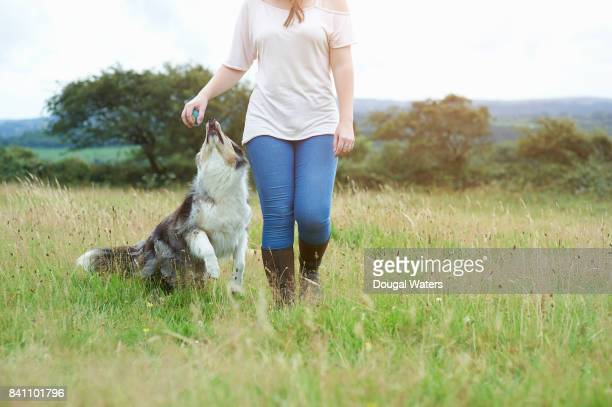 Woman with ball walking dog in meadow.