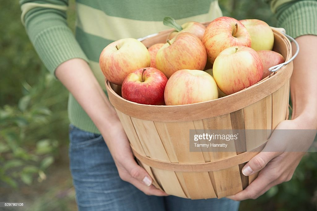 Woman with basket of apples : Stock Photo