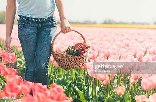 Woman with basket of flowers on a tulips field (Netherlands)