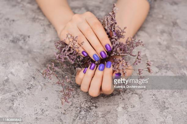 woman with beautiful manicured nails covered with modern purple nail varnish, enamel or lacquer displaying her fingers alongside a pink gerbera daisy - enamel stock pictures, royalty-free photos & images