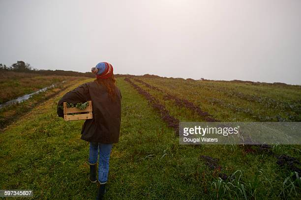 Woman with box of kale on smallholding.