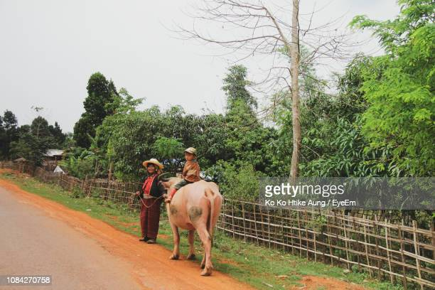 woman with boy sitting on cow walking on road - ko ko htike aung stock pictures, royalty-free photos & images