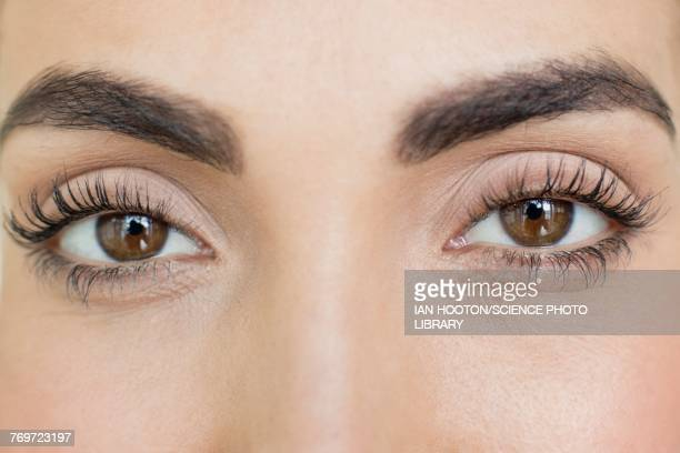 woman with brown eyes - eyelash stock pictures, royalty-free photos & images