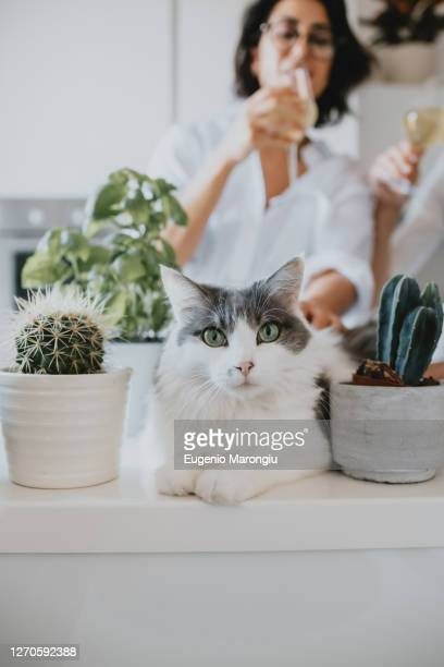 woman with brown hair wearing glasses standing in a kitchen, white cat lying on counter, looking at camera. - un seul animal photos et images de collection