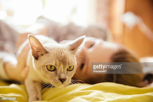 woman with burmese cat at home - burmese cat stock pictures, royalty-free photos & images