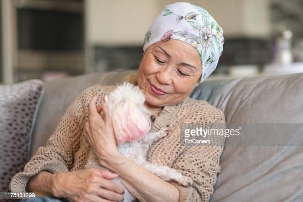 vrouw met kanker ontspant thuis met haar huisdier hond - gedomesticeerde dieren stockfoto's en -beelden