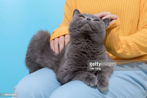 woman with cat sitting on her lap agasint color background - hairy women stock pictures, royalty-free photos & images