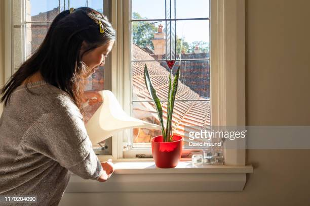 woman with cerebral palsy watering pot plants at home - david freund stock pictures, royalty-free photos & images