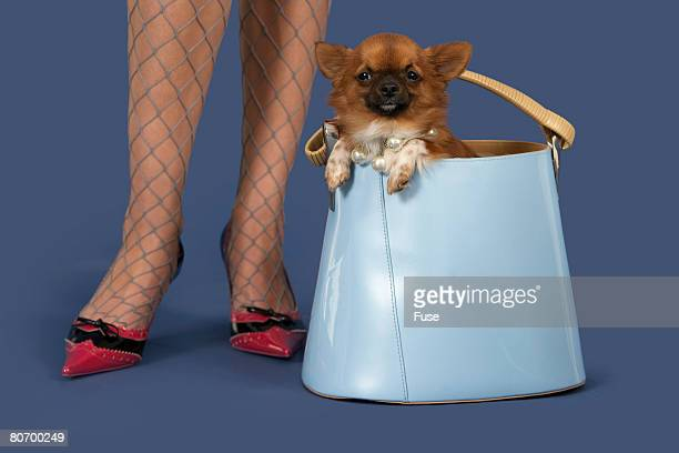 Woman with Chihuahua in Purse