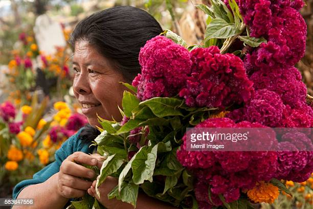 woman with cockscomb flowers at cemetery during day of the dead celebration, teotitlan del valle, mexico - cockscomb plant - fotografias e filmes do acervo