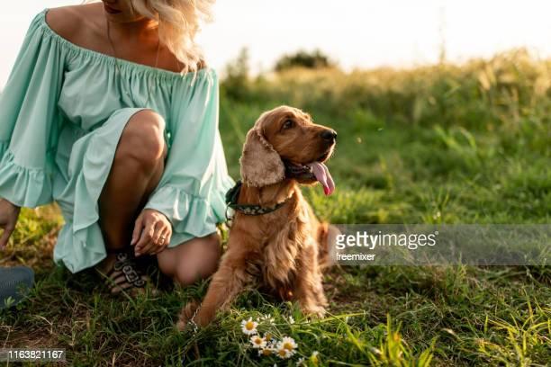 woman with dog - cocker spaniel foto e immagini stock