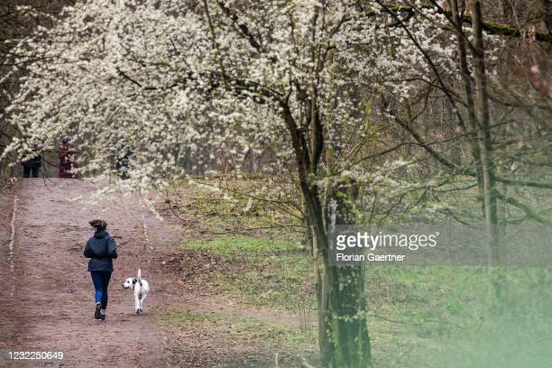 Woman with dog runs through a forest on April 11, 2021 in Berlin, Germany.