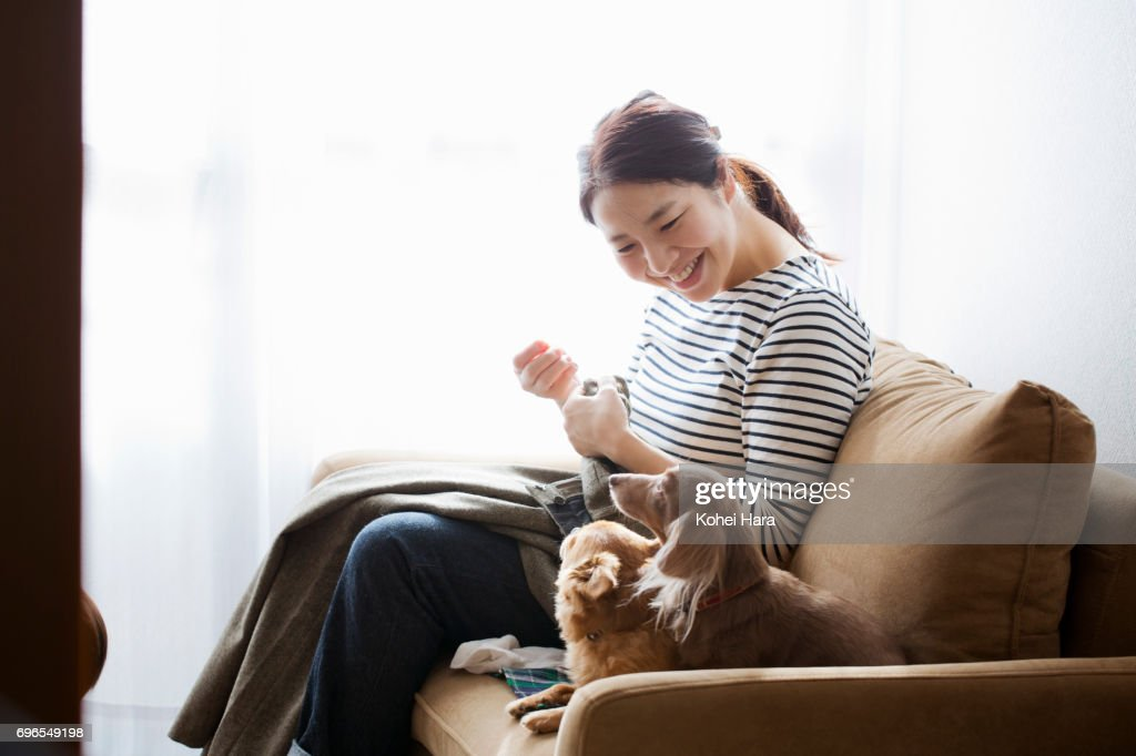 Woman with dogs sewing on the sofa : Stock Photo