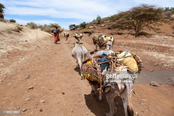 woman with donkeys transporting water - scarce stock pictures, royalty-free photos & images