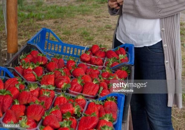 収穫したばかりのイチゴの女性 - イタリア ピエモンテ州 ストックフォトと画像