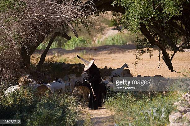 woman with goats, wadi dawan, yemen - peter adams stock pictures, royalty-free photos & images