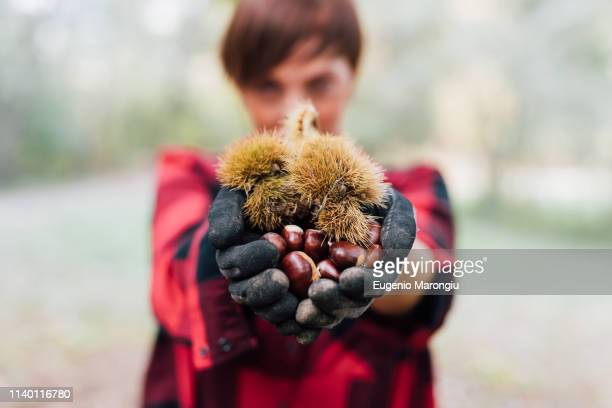 woman with handful of chestnuts - chestnut food stock pictures, royalty-free photos & images