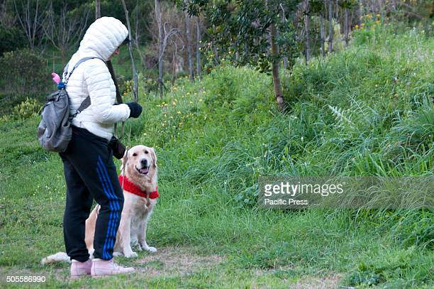 AVERNO POZZUOLI NAPOLI ITALY A woman with her dog during the celebrations for the feast of Saint Anthony It is a centuriesold tradition that is...
