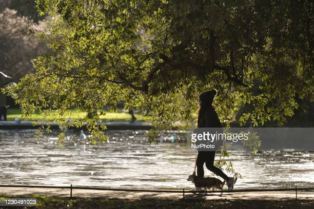 Woman with her dog walking next to a frozen pond in St Stephen's Green Park, Dublin. The Department of Health reported today a new daily record of...