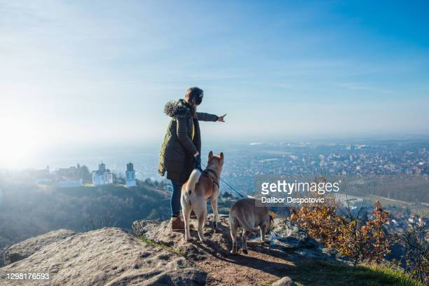a woman with her dogs on top of a mountain. - serbia stock pictures, royalty-free photos & images