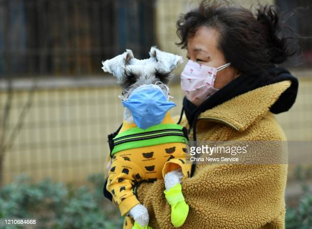 Woman with her pet dog, both wearing face masks, walks on street amid novel coronavirus spread on March 6, 2020 in Shijiazhuang, Hebei Province of...