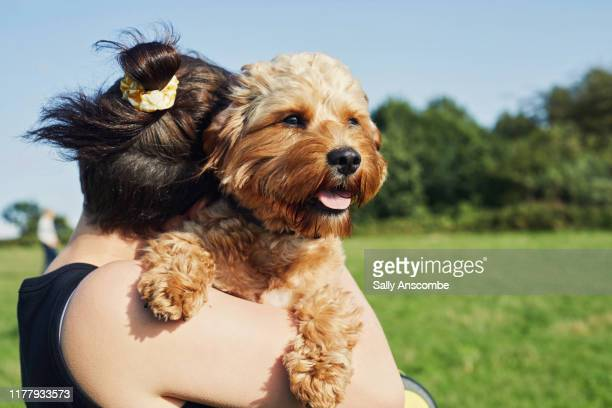 woman with her pet dog - sally anscombe stock pictures, royalty-free photos & images