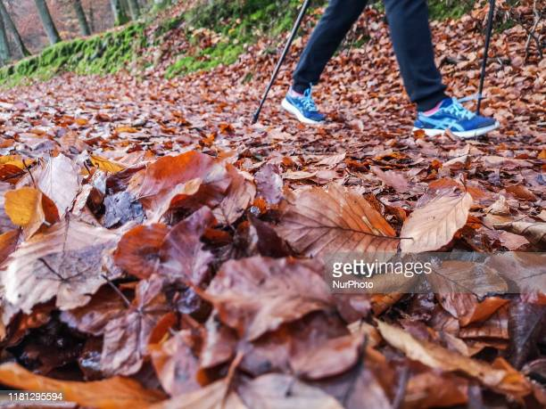 Woman with hiking poles doing Nordic Walking in the forest walking by the road covered with brown leaves during the sunny fall weather is seen in...