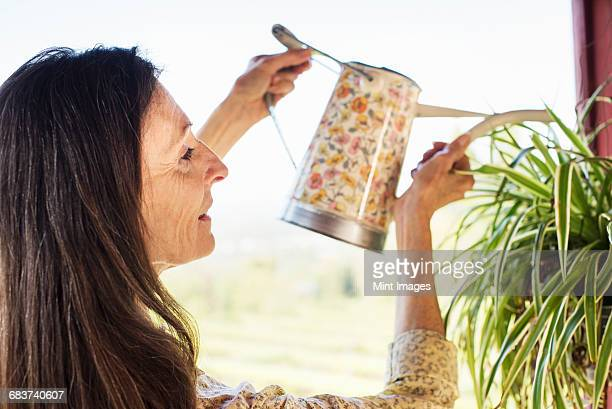 a woman with long brown hair watering a plant. - wasserpflanze stock-fotos und bilder