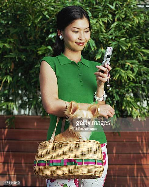woman with mobile phone, carrying long haired chihuahua in bag - long haired chihuahua stock photos and pictures