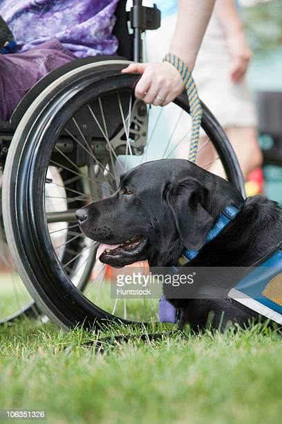 woman with multiple sclerosis in a park with a service dog - servicehund stock-fotos und bilder