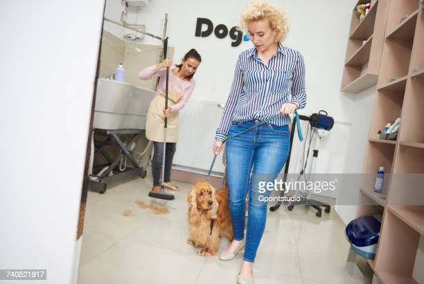 woman with pet cocker spaniel leaving dog grooming salon - sweeping stock pictures, royalty-free photos & images
