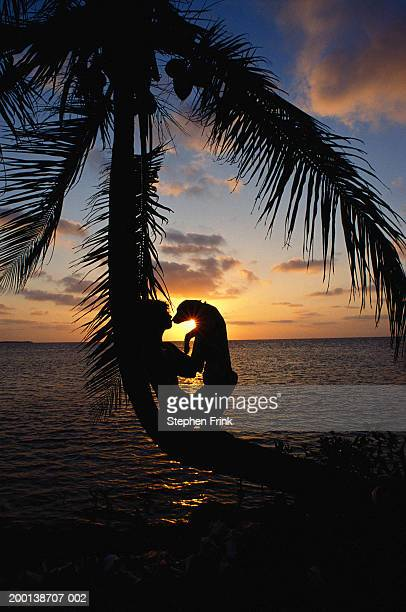 Woman with puppy sitting on palm tree by ocean at sunrise, silhouette