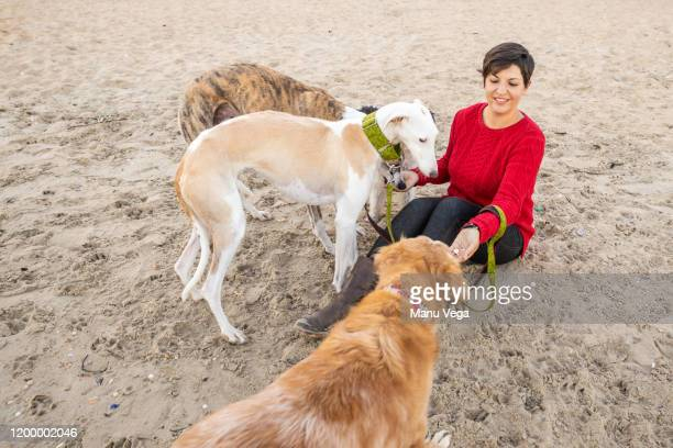 woman with red sweater looking at camera, sitting on the beach with four dogs - stock photo - travelstock44 stock pictures, royalty-free photos & images