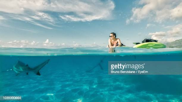 woman with shark swimming in sea - lagoon stock pictures, royalty-free photos & images