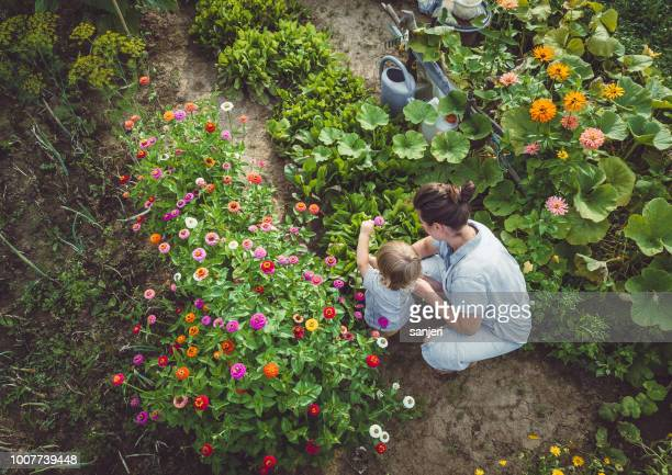 woman with son in a home grown garden - vegetable garden stock pictures, royalty-free photos & images