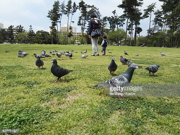 woman with son walking amidst pigeons on grassy field at park - paloma mami fotografías e imágenes de stock