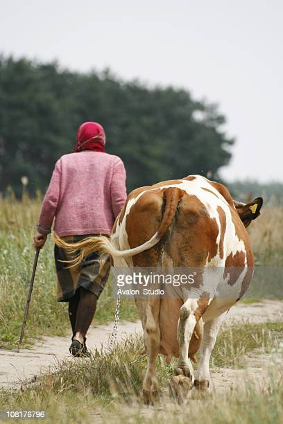 woman with the cow - milk maid stock photos and pictures