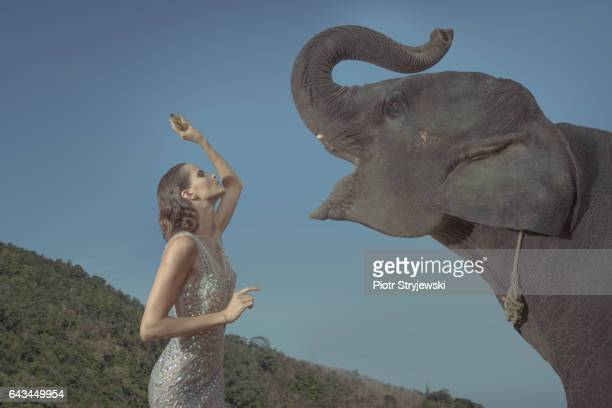 woman with the elephant - white elephant stock photos and pictures